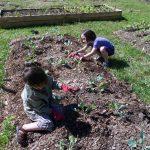 FANS Community Garden on Clover Lane