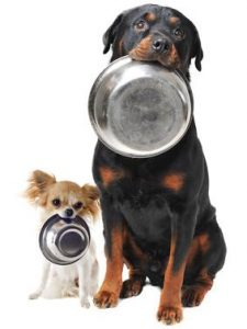 Two dogs with their food bowls