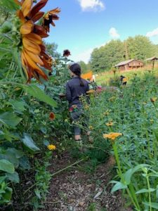 Working in the Swannanoa Community Garden